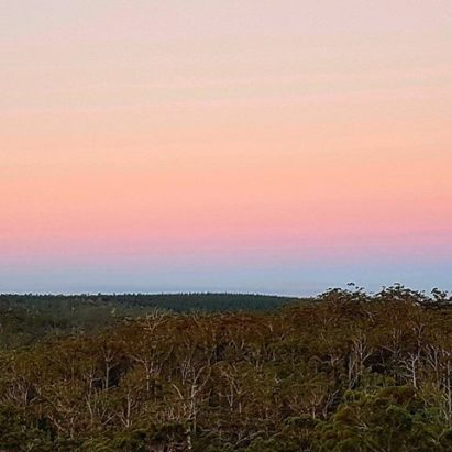 sunset over forest