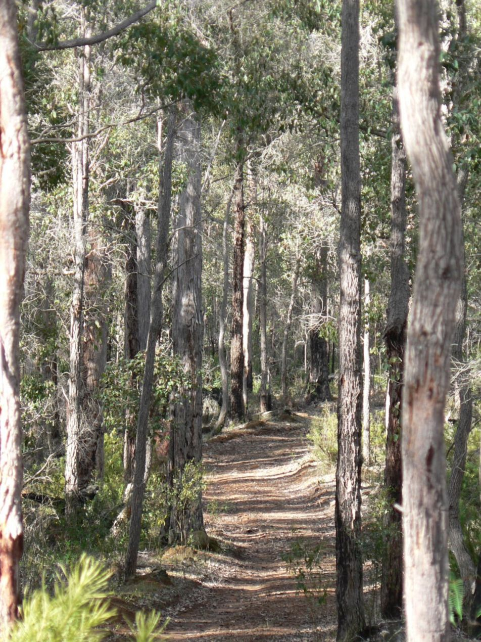 Walk trails through Scarlet Woods forrest